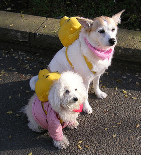 Pampered pets in park